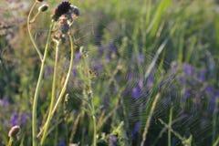 pająk swój sieć zdjęcie royalty free