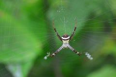 Pająk w pajęczyny notatce Fotografia Royalty Free