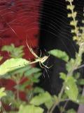 pająk zielone zdjęcie royalty free