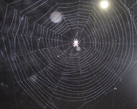 Pająka araña ilustracji