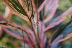 Pająka i sptider sieć na liściach obrazy stock