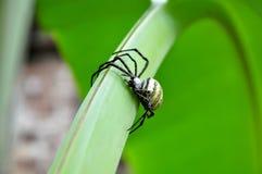 pająka tylny kolor żółty Zdjęcia Royalty Free