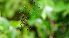 pająki fotografia royalty free