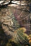 pajęczynę Obrazy Stock