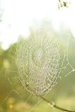 pajęczynę Obraz Royalty Free