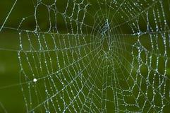 pajęczynę zdjęcie stock