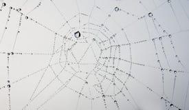pajęczyna zdjęcie royalty free