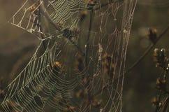 Pajęczyna - jesieni natury szczegół Obraz Royalty Free