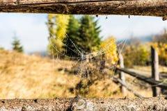 Pajęczyna między woodern ramą Fotografia Royalty Free