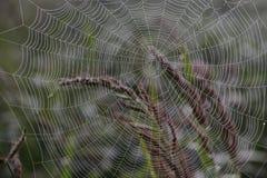 Pajęczyna; pająk sieć; tela aranea; [ç' µå ½ ±] Das Spinnennetz zdjęcie stock