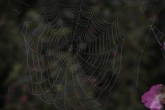 Pajęczyna; pająk sieć; tela aranea; [ç' µå ½ ±] Das Spinnennetz obrazy stock