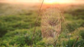 Pajęczyna w rosa kroplach w mglistym świcie Pajęczyny kiwanie w wiatrze zbiory
