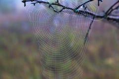 Pajęczyna w rosie, jesień Fotografia Royalty Free