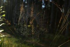 Pajęczyna z pająkiem na trawie zginał w lesie fotografia royalty free