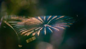 Pajęczyna z pająkiem w centrum shimmers z wszystkie kolorami zdjęcie stock