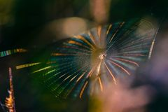 Pajęczyna z pająkiem w centrum shimmers z wszystkie kolorami zdjęcie royalty free
