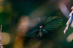 Pajęczyna z pająkiem w centrum shimmers z wszystkie kolorami fotografia royalty free