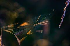 Pajęczyna z pająkiem w centrum shimmers z wszystkie kolorami zdjęcia stock
