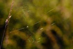 Pajęczyna z pająkiem w centrum shimmers z wszystkie kolorami obrazy stock