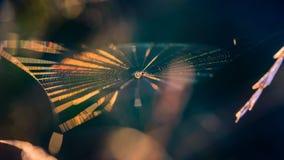 Pajęczyna z pająkiem w centrum shimmers z wszystkie kolorami obrazy royalty free