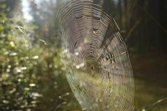 Pajęczyna z Przecinającym pająkiem na trawie zginał w lesie obraz stock