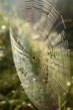 Pajęczyna z Przecinającym pająkiem na trawie zginał w lesie obrazy stock