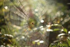 Pajęczyna z Przecinającym pająkiem na trawie zginał w lesie zdjęcia royalty free
