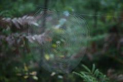 Pajęczyna z Przecinającym pająkiem w lesie fotografia stock