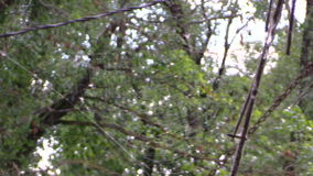 Pajęczyna z wiele małymi komarnicami w drzewnym tle Ostrości zmiana zbiory