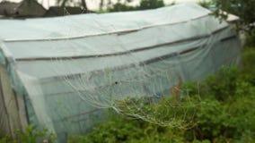 Pajęczyna z wodnymi kropelkami w obszarach wiejskich zbiory