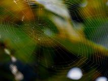 Pajęczynowaty insekta cobeb słońca świecenie zamazywał tło roślinność colorfully tropi netto oklepa dla insektów obraz royalty free