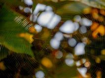 Pajęczynowaty insekta cobeb słońca świecenie zamazywał tło roślinność colorfully tropi netto oklepa dla insektów obraz stock