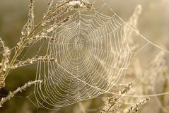pajęczyny łąkowy pająków wschód słońca fotografia stock
