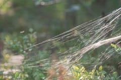 Pajęczyny lub pająka sieci makro- selekcyjna ostrość obraz royalty free