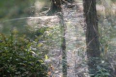 Pajęczyny lub pająka sieci makro- selekcyjna ostrość fotografia royalty free