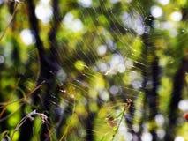 Pajęczyny w promieniach jesieni słońce obraz royalty free