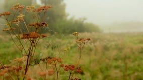 Pajęczyny z rosa kroplami na suchych trzonach krowa odchwaszczają zdjęcie wideo