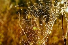 pajęczyny Zdjęcie Stock