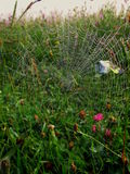 Pajęczyny na trawie Zdjęcia Stock