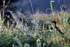 Pajęczyny w ranku trawa Zdjęcie Royalty Free