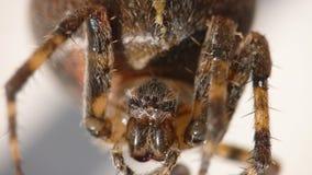pająk Zdjęcia Royalty Free