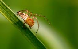 pająk Obraz Stock