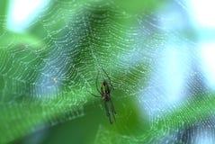 pająk Obraz Royalty Free