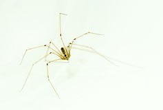 pająk Zdjęcie Royalty Free