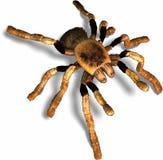 pająk Fotografia Stock