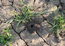 Pająk earthen dziura w zielonym polu Zdjęcia Stock