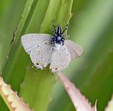Pająk je motyla Zdjęcie Stock