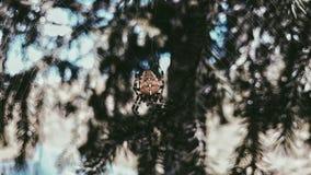 Pająk na drzewie fotografia stock
