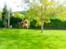Paj?k na spider& x27; s sie? z krajobrazu i zieleni t?em obrazy stock