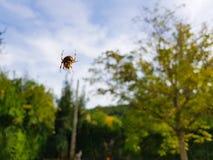 Paj?k na spider& x27; s sie? z krajobrazu i zieleni t?em fotografia royalty free
